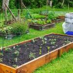 Hochbeetgärten---die-bequemen-Gärten